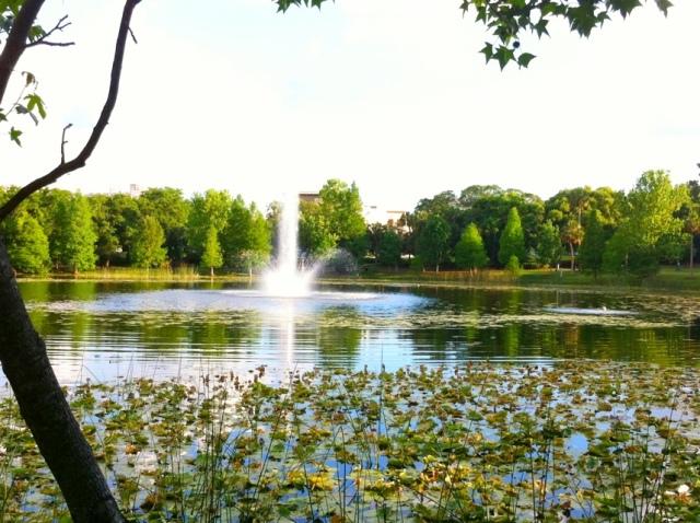 Lake Lily