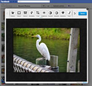 Aviary Facebook App Preview